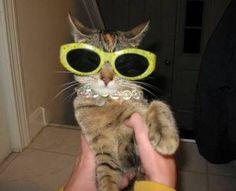cats cool glasses 26 (1)