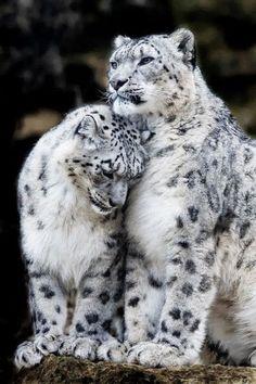 TOP-10-Emotional-photos-of-animals_01