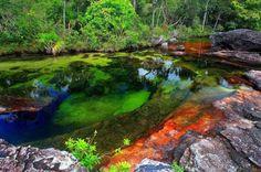Caño de cristales, Rio de los Cinco colores http://www.labioguia.com/cano-de-cristales-rio-de-los-cinco-colores/