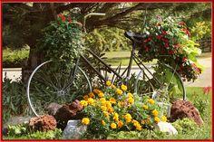 Bike turned into a planter. Niwot, CO