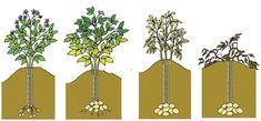 Agriculture, Vegetable Garden, Container Gardening, Planters, Home And Garden, Outdoor Structures, Green, Diy, Angora