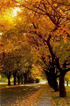 Die eikebome wat al langs Stellenbosch se strate staan word elke jaar die mooiste goue kleur wanneer herfstyd aanbreek. Autumn Trees, Holiday Destinations, Wine Country, Lombok, Nature Photography, Travel Photography, South Africa, Beautiful Places, Places To Visit