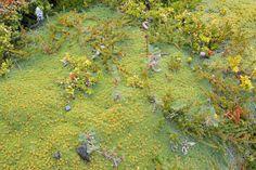 Micro flora in Patagonia (Tierra del Fuego, Argentina) - Beagle Canal