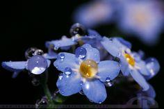 Blue by thrumyeye.deviantart.com on @deviantART
