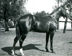 """""""Royal King was a horse that you could put anybody on and win,"""" said Charlie Mae Ablin, wife of one of Royal King's owners, Earl Albin. Royal King was inducted into the Hall of Fame in 1997. Learn more about the AQHA Hall of Fame inductees at http://aqha.com/Foundation/Museum/Hall-of-Fame/Hall-of-Fame-Inductees.aspx ."""