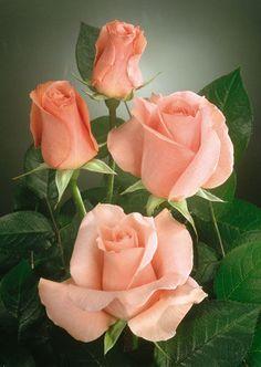 Розовые розы - 4. С кутюрье на одной волне Шедоу, Изба-гадальня