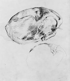 John Singer Sargent (American,1856–1925). Dog, ca. 1880. The Metropolitan Museum of Art, New York. Gift of Mrs. Francis Ormond, 1950 (50.130.142a)