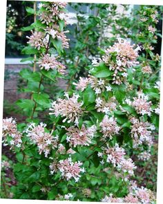 Spring flowers, move over. Theseastounding shrubs can get any gardener through the summer doldrums. Evergreen Shrubs, Deciduous Trees, Trees And Shrubs, Flowering Shrubs For Shade, Shade Shrubs, Shade Plants, Garden Shrubs, Shade Garden, Garden Edging