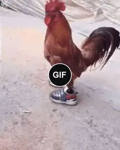 Such a fashionable cock you have not seen
