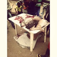 Slaughterhouse, gazelle and Tchimbriky. Angola hunted by hunters in the north, marketed in Luanda. Matadouro , gazela e Tchimbriky. Caçado por Caçadores de Angola no norte, comercializado em Luanda.