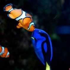 Marlin and Dory kissed!
