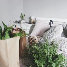 #melinasouza #serendipity  #spock  #yorkie  #yorkshireterrier   #yorkielove   #plants  #plantas