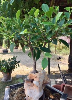 My friend hobby is to grow bonsaïs over rocks (Toscany) https://i.redd.it/5e9hj9d6qj301.jpg