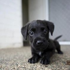 Puppys are so adorable! I wish our dogs were small again