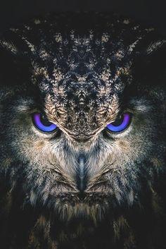 Antares, a Eurasian eagle-owl. Pet of Scorpius Hyperion Malfoy. Owl Photos, Owl Pictures, Birds Photos, Beautiful Owl, Animals Beautiful, Eurasian Eagle Owl, Owl Artwork, Owl Tattoo Design, Owl Eyes