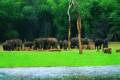Idukki Wildlife Sanctuary is one of the well-known in Idukki District of Kerala. Idukki wildlife Sanctuary has numerous tropical and deciduous grasslands, lakes and rivers which give remarkable experience to the tourists. Munnar, Tourist Places, Cool Places To Visit, Places To See, 2 Days Trip, Weekend Trips, Travel And Tourism, India Travel, India Trip