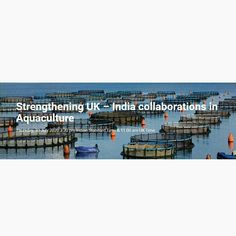 What makes UK-India collaboration more important in the field of Aquaculture? Know more from the upcoming webinar  by the Department of International Trade (DIT), UK.  Date: Thursday, 30 July 2020 Time: 1100-1230 hrs BST / 1530-1700 hrs IST    #Aquaconnect #aquaculture #sustainableshrimpfarmig #shrimp #webinar Pm Time, Aqua Culture, 30 July, Made In Uk, International Trade, Collaboration, Fields, Thursday, Shrimp