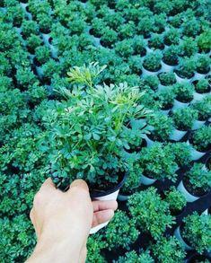 Aprenda a purificar facilmente o ar de sua casa com plantas Ares, Outdoor Lighting, Gardening, Garden, Home, Nighty Night, Interiors