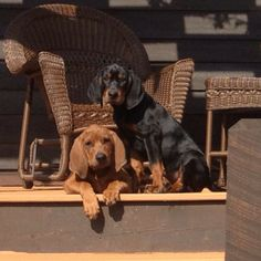 awww---its like our house but our redbone and black and tan are way bigger now