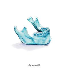 Mandible Watercolor Print  Anatomy Watercolor Art Print