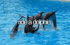 ride, bucketlist, dream come true, buckets, dolphins