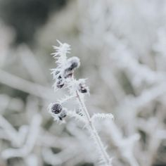 My world is glazed over with frost and the slightest drizzle of snow this morning. I'm in #love