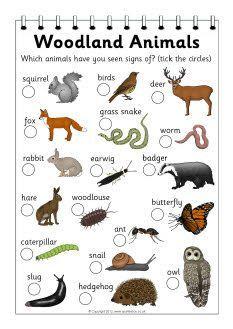 Woodland Clip Art - <b>Forest</b> <b>Animals</b> Clip Art - Woodland Critters Clip ...