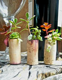 Create a Magical Mini Succulent Garden With Repurposed Wine Corks