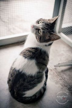 Little lady seeking a new home... gorgeous girl had clearly come from a loving home but some evil person has trapped her and brought her to Renbury Farm Animal Shelter. She is just one of many being trapped in Bonnyrigg right now. I met one such horrible