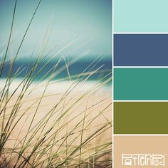 Color Palette - Beach Grass