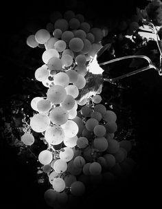 Гроздь винограда - null