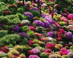 azalea gardens in japan | azalea bushes at shiofune kannon temple tokyo japan azalea bushes at ...