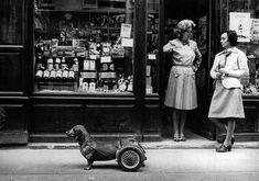 """""""Le chien à roulettes"""" by Robert Doisneau."""