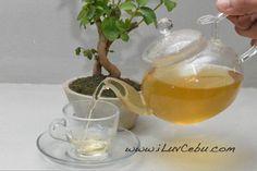 Jasmine Green Tea at Tea Religion