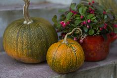 Autumn decoration in the garden: pumpkins and wintergreens