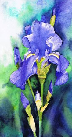 Blue Iris by watercolour painting by Julie Horner UK artist