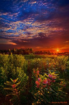 More of Wisconsin from Phil Koch (Heaven on Earth Flickr | Flickr - Photo Sharing!)