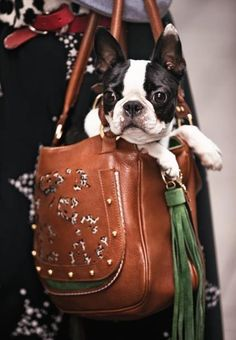 Would you bring your dog around town like this?