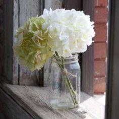 cream and green hydrangea bundle