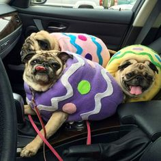 just in case you wanted to see some pugs dressed as easter eggs... here you go