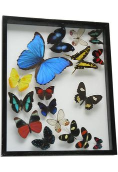 mounted framed butterflies