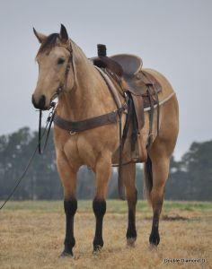 Cute!  Quarter Horse stallion DDD King Tivio San