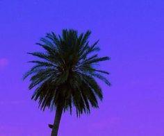 #palmtree #blue #purple #sunset #tropical