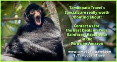 Still time to save on early bookings for 2017 before the price increase.... Join us for an unforgettable Peruvian Amazon rainforest experience during 2017! www.tambopatatravel.com #tambopata #peru #rainforest #travel #specials #amazon