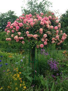 Loved Monet's Garden! Giverney, France