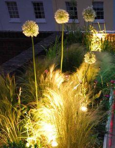 Iluminación para plantas terraza