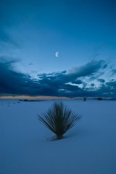 ✮ Yucca plant and the rising moon in White Sands National Monument, New Mexico