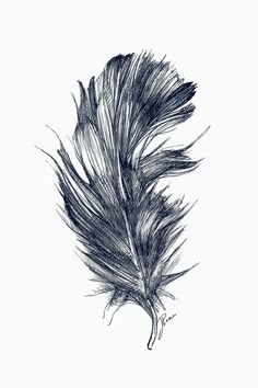 Owl Feather Art Print