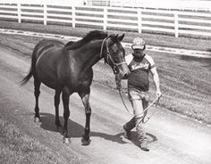 Likely Exchange(1974)(Filly) Terrible Tiger- Likely Swap By Swaps. 5(C)x5(C)x4(F)x4(F) To Hyperion. 72 Starts 23 Wins 15 Seconds 13 Thirds. $475,140. Won Delaware H(G1), Ky Cardinal H, Fleur De Lis H(Twice), Mint Julep H, Latonia Championship S, 2nd Sheridan S(G2), Falls City H(G3), 3rd Spinster H(G1). Dam Of Creme Fraiche. 2nd Dam Of Clear Mandate.