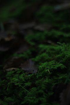 Moss - NMLA IVMM